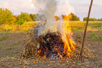 Pile of crops burning in field with pitchfork nearby