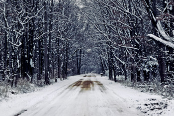 A snowy country road with an archway of trees lining the road