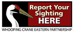 Report Whooping Crane sightings here