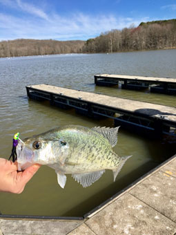 Photo of Crappie