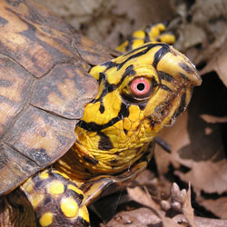 DNR: Turtles as Pets