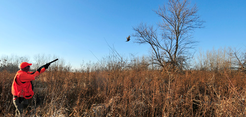 Hunter shoots bird in grassland