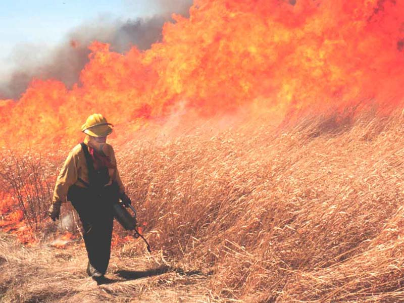 Prescribed burn at Potato Creek State Park
