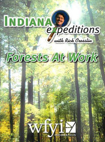 Indiana Expeditions - Forests at Work