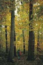 Forests of Indiana