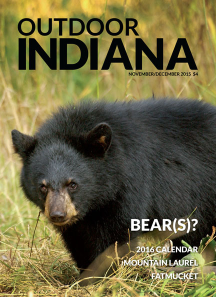 A black bear, like this one from Michigan, wandered into northern Indiana in mid-June, marking the first confirmed sighting of a wild bear in the state since 1871.