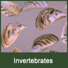 aquatic invertebrates