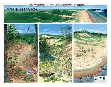 2010 Ecosystems of the Indiana Coastal Region poster
