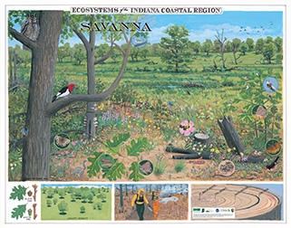 2016 Ecosystems of the Indiana Coastal Region poster