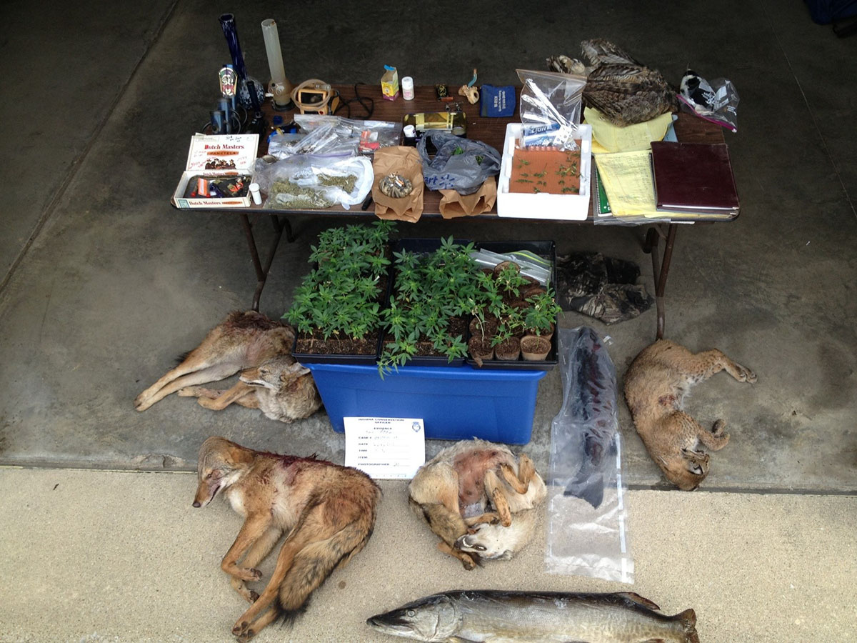 Illegal wildlife and drugs seized in a poaching investigation.