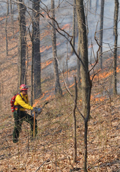 Prescribed burn at Brown County State Park