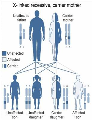 Image result for Genetics and Hearing Loss