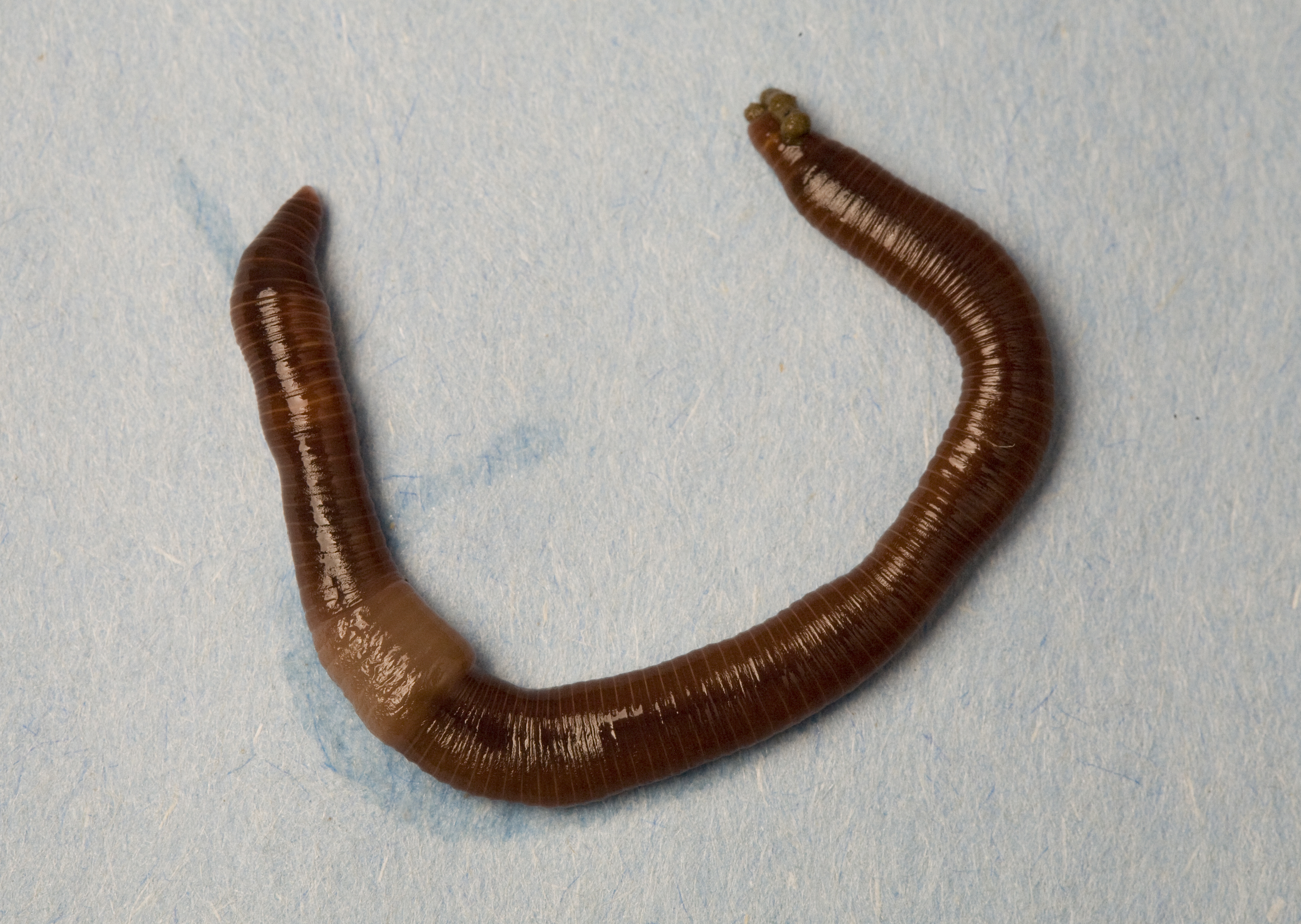 Raise Your Hand If You Have Ever Seen A Worm