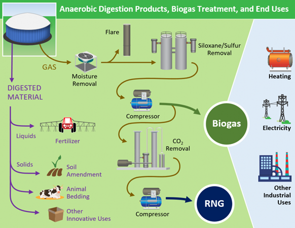 Anaerobic Digestion Products, Biogas Treatment, and End Uses